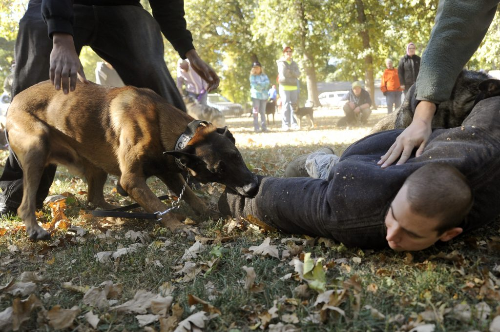 Police Dog Grab and Hold Training