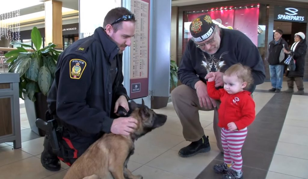 Police Puppy in Training, at Winnipeg Shopping Mall